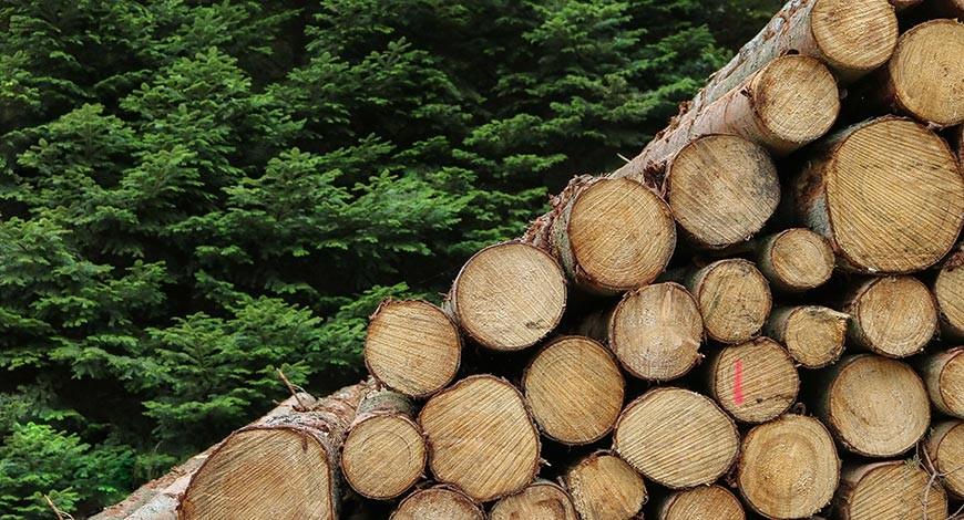 Charakteristika a použitie dreva z ihličnatých drevín: